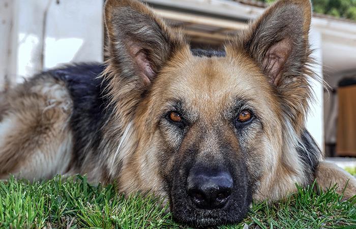 Video viral reacción perro cree amigo muerto