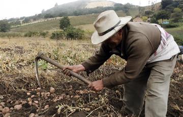 Más de 14 mil familias campesinas han sido afectadas por las heladas en Boyacá