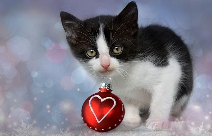 Regalos mascotas San Valentín