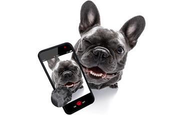 Consejos para que tu mascota quede bien en las fotos