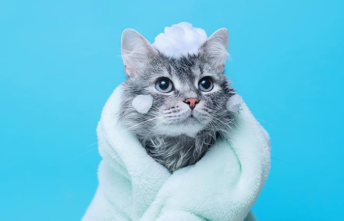 Es bueno o no bañar gato