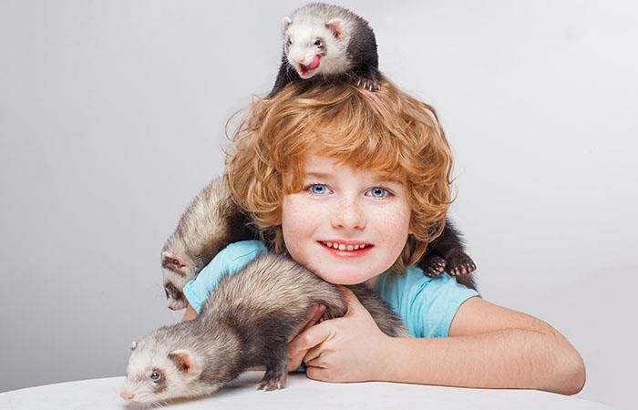 El hurón como mascota. Foto: Shutterstock