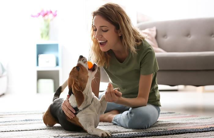 ¿Qué tan recomendable es hablar a tu perro como bebé?. Foto: Shutterstock