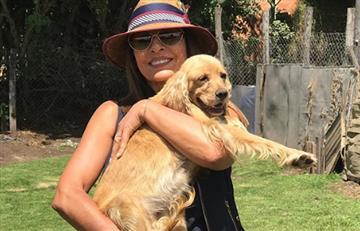 """""""Primero boto a un marido que a un perro"""": Amparo Grisales y su papel como defensora de animales"""