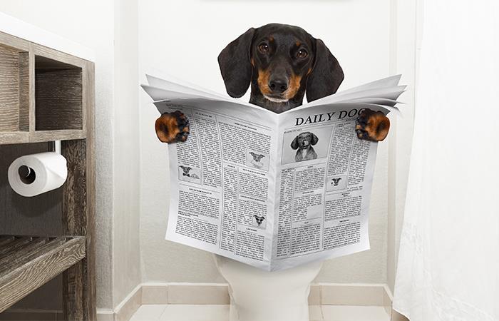 Cómo enseñar perro hacer chichi lugar correcto