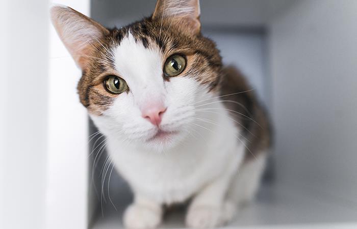 ¿Qué significa la mirada fija de tu gato?. Foto: Shutterstock