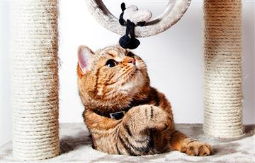 Regalos perfectos para tu pequeño felino en el Día Internacional del Gato