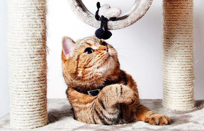 ¿Qué regalarle a tu gato?. Foto: Shutterstock