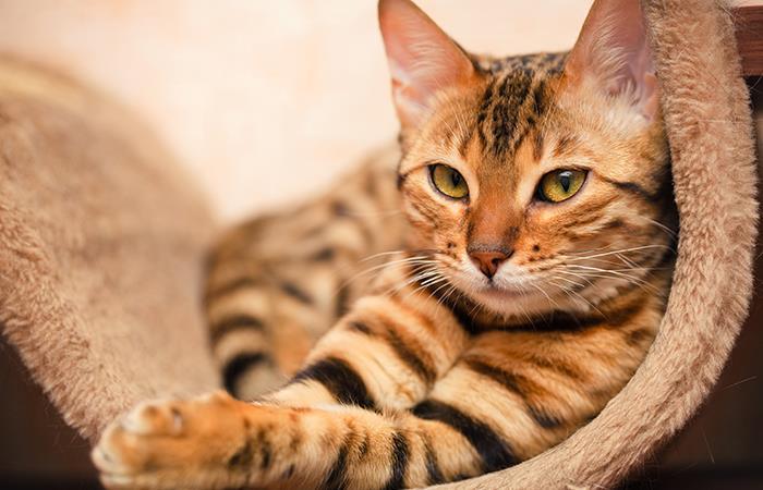 Estos son los graves errores que estás cometiendo con tu gato