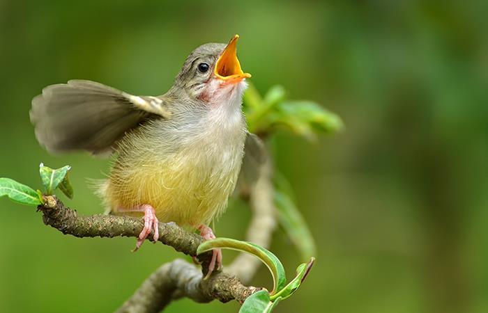 Las voces de los pájaros: Esto significa cada uno de sus cantos