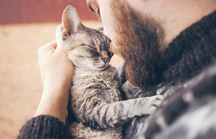 Por que gatos amasan