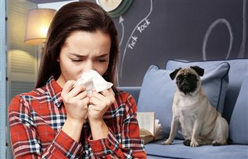 Cuidado, tu mascota SÍ puede transmitirte enfermedades