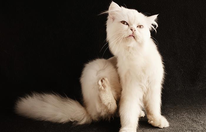 ¡Adiós a las pulgas de tu mascota!. Foto: Pixabay