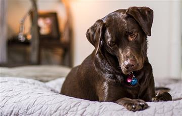 Esto es lo que debes hacer si tu perro orina la cama