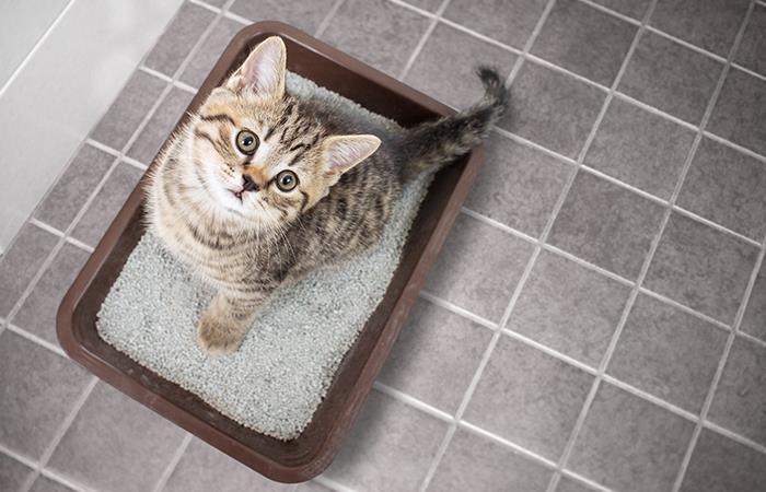 No te equivoques al elegir la arena de tu gato. Foto: Shutterstock
