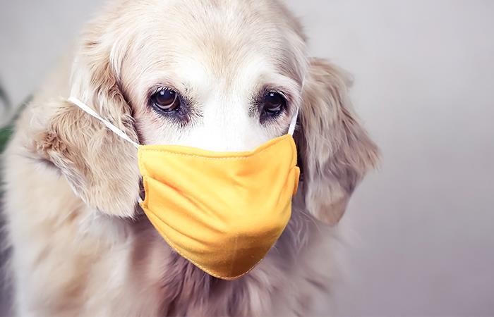 Se debe poner tapabocas mascotas protegerlas coronavirus