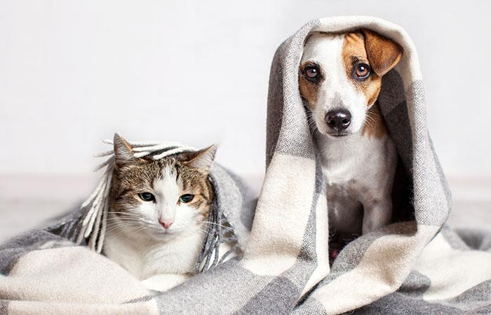 ¡Las mascotas no tienen coronavirus!. Foto: Shutterstock