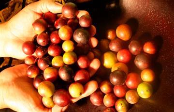 Camu Camu: la vitamina C hecha fruta