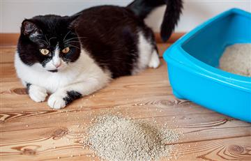 El popó de gato podría curar el cáncer
