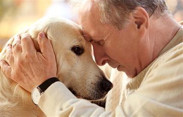Mascotas: La mejor compañía para los adultos mayores