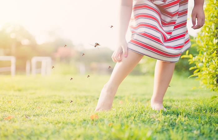¿Viste insectos en tus sueños?. Foto: Shutterstock