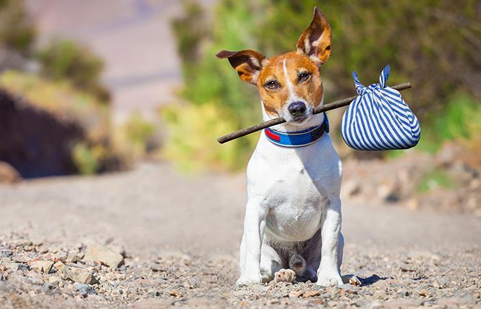 Internet adopción animales compañía