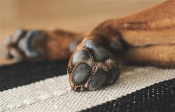 Así puedes desinfectar las patas de tu mascota