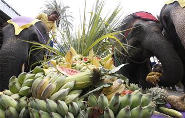 Elefantes domesticados sufren de hambre a causa del COVID-19 en Tailandia