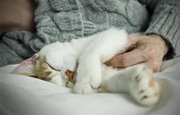 Esta es la razón por la que tu gato ama dormir a tu lado