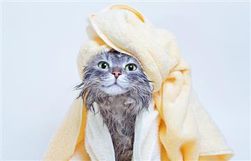 """Cuarentena: El riesgo de bañar a tu mascota frecuentemente para """"desinfectarla"""""""