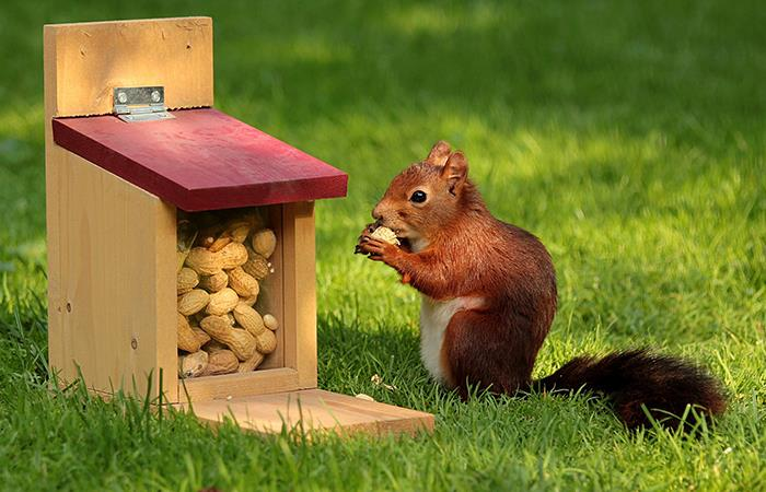 Ardillas y aves tienen su propio restaurante. Foto: Pixabay
