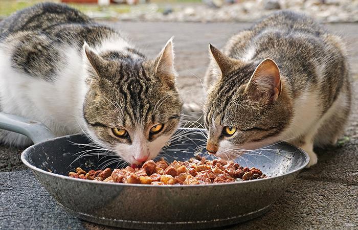 Refugio en Estados Unidos ofrece comida gratis para mascotas. Foto: Pixabay