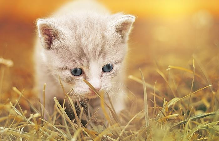Gatos guardianes espirituales