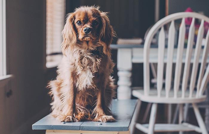 Recomendaciones para el cuidado de perros y gatos en cuarentena. Foto: Pixabay
