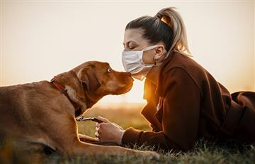 Perros podrían llegar a detectar casos de coronavirus