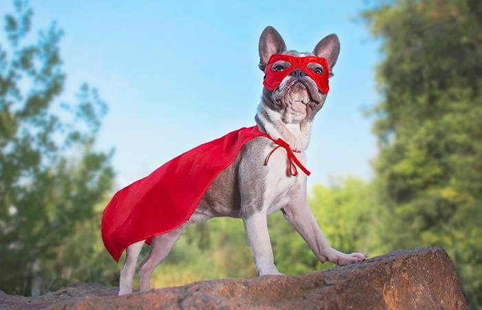 Perro viral al defender casa disfrazado Superman