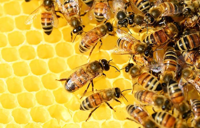 Beneficios cera jalea real y miel en belleza