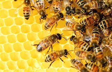 Beneficios de las abejas en la belleza