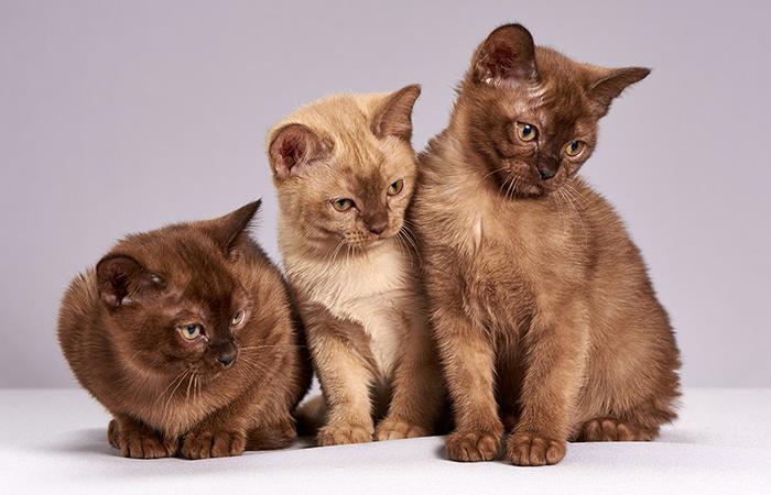 Como saber edad verdadera gato