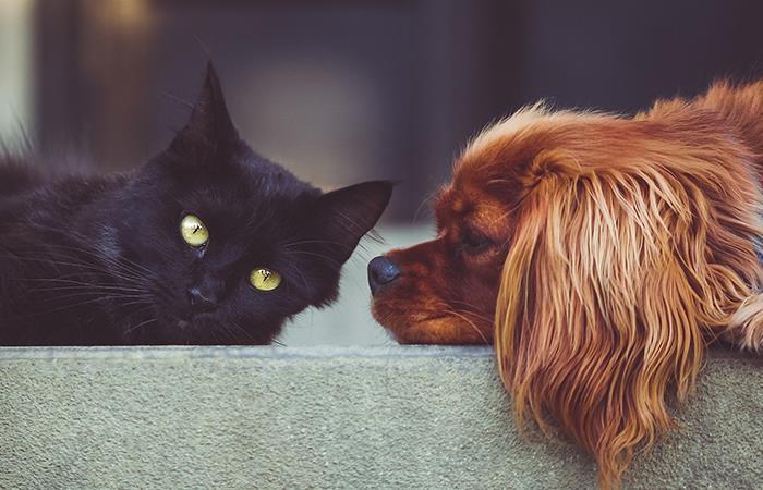 Gatos son más perjudicados durante cuarentena