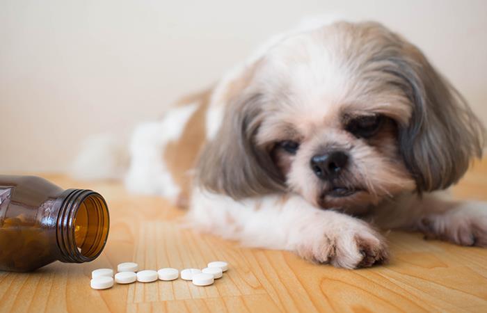 Consejos para dar una pasta a un perro de forma fácil y rápida. Foto: Shutterstock