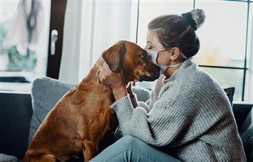 Coronavirus en mascotas: Confirmando o desmintiendo teorías