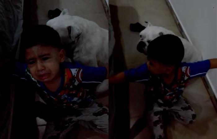 Niño riega lagrimas madre no castigue perro