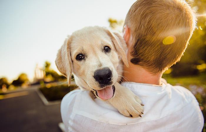Las locuras de tu perro tienen una explicación. Foto: Pixabay