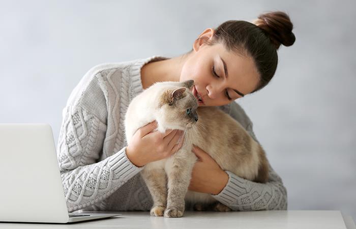 Los motivos por los que tu gato se restriega contra tu cara. Foto: Shutterstock