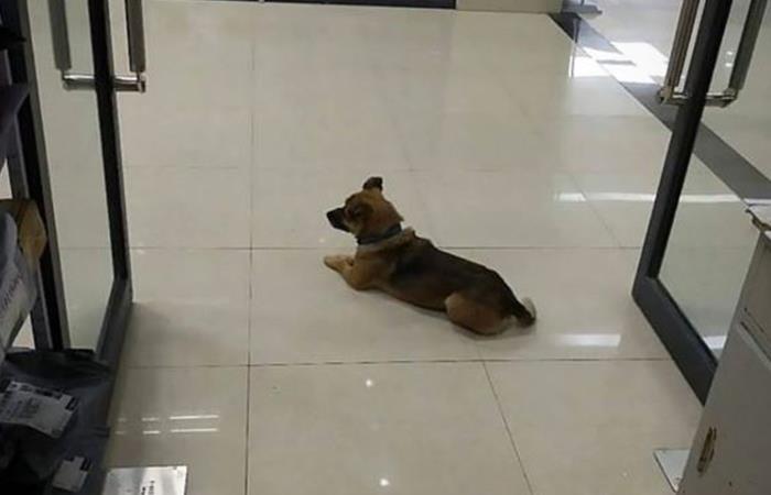 Perrito esperó 3 meses a su dueño que ya había fallecido. Foto: Twitter