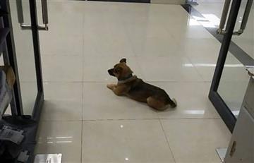 Perrito esperó 3 meses a su dueño que había muerto
