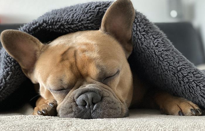 Conoce las fases del duelo por la pérdida de una mascota. Foto: Pixabay
