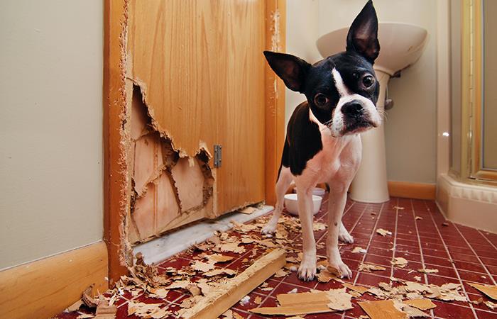Los perros adolescentes son rebeldes, como los humanos. Foto: Shutterstock