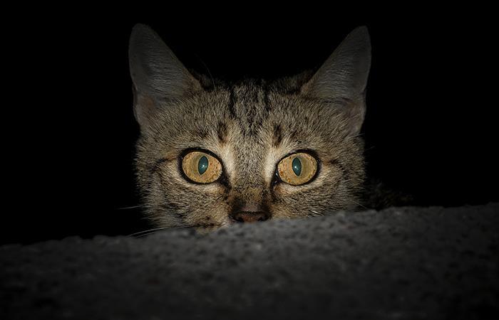 Así harás que tu gato duerma toda la noche. Foto: Pixabay